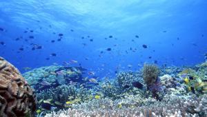 Rafa koralowa w pobliżu Wysp Salomona
