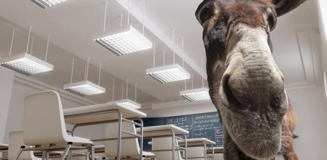 Osioł w klasie